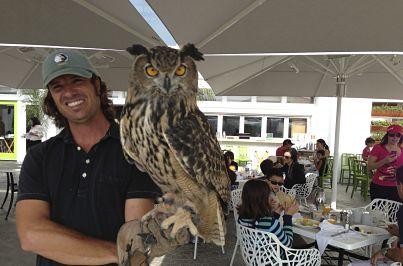 owl jpg