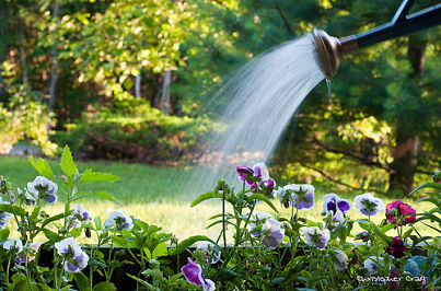 Watering-plants_opt
