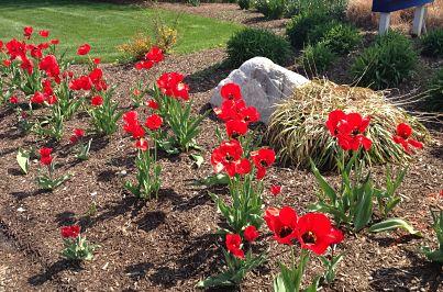 spring flowers_opt