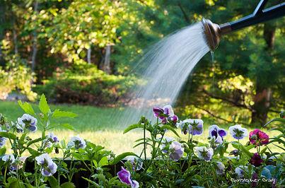 Watering-plants_opt